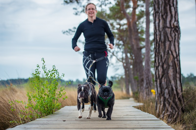 Everything you need to know about running with your dog. canicross myths dispelled