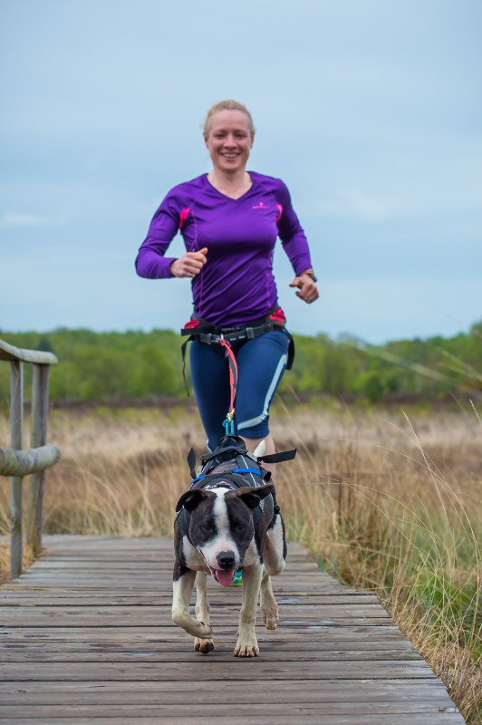 Top tips and kit needed for running with your dog