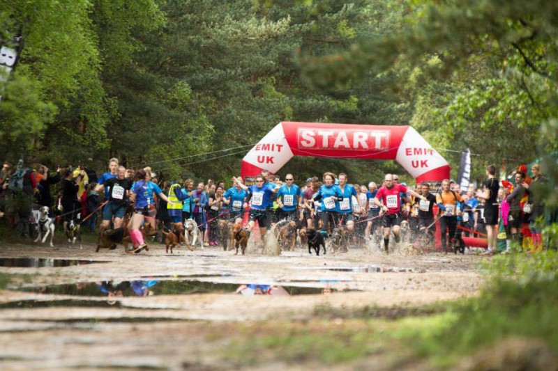 Advice and top tips on canicross and races