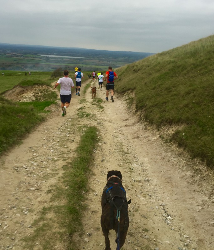 Terrain for canicrossers and runners along the Beachy Head Marathon