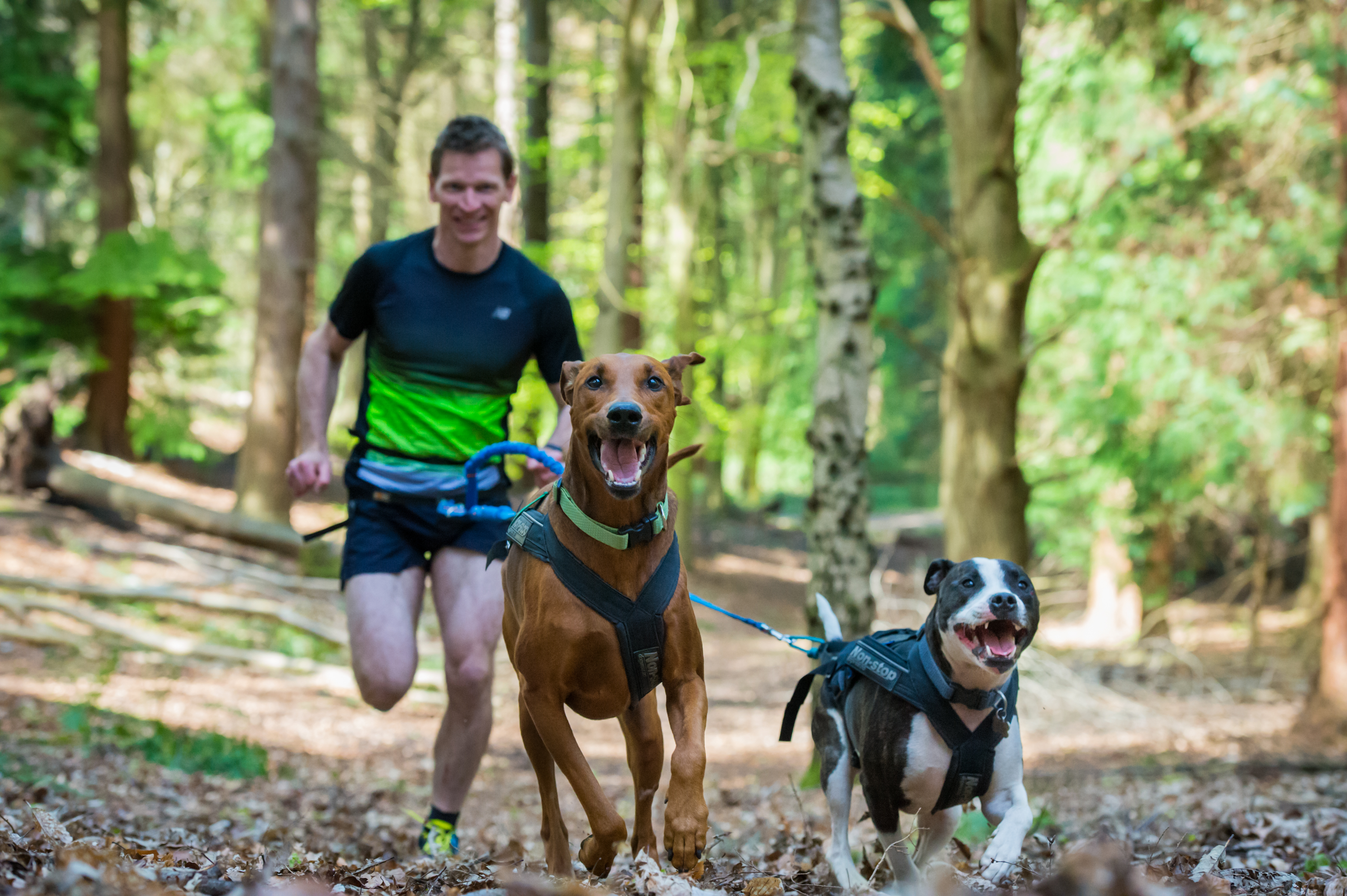 Dogs For Runners Uk
