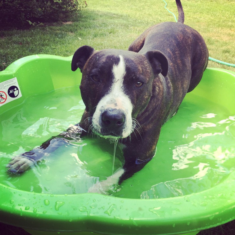How to keep your dog cool over the summer