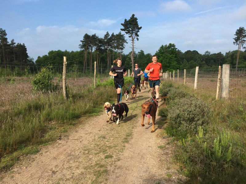 Canicross with dogs and off road running